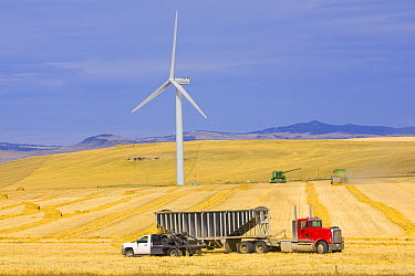 Windmill and trucks collecting harvest in the fields of traditional farming community, Alberta, Canada  -  Yva Momatiuk & John Eastcott