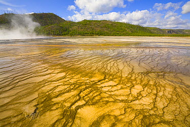 Bacterial mats in Grand Prismatic Pool, Yellowstone National Park, Wyoming  -  Yva Momatiuk & John Eastcott