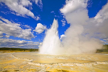 Great Fountain Geyser erupting, Yellowstone National Park, Wyoming  -  Yva Momatiuk & John Eastcott