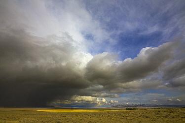 Sagebrush prairie and heavy cumulus clouds, Nevada  -  Yva Momatiuk & John Eastcott