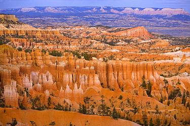 Colorful hoodoos, sandstone spires in alpenglow, Bryce Canyon National Park, Utah  -  Yva Momatiuk & John Eastcott