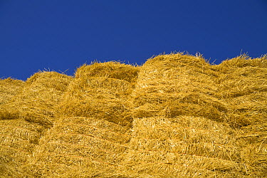 Harvested straw tied in bales, Palouse Hills, Washington  -  Yva Momatiuk & John Eastcott