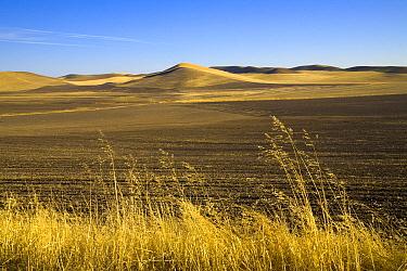 Harvested and freshly ploughed wheat fields, Palouse Hills, Washington  -  Yva Momatiuk & John Eastcott