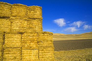Harvested straw tied in bales under lofty cumulus clouds, Palouse Hills, Washington  -  Yva Momatiuk & John Eastcott