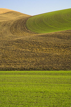 Harvested and freshly ploughed wheat fields with winter wheat already growing, Palouse Hills, Washington  -  Yva Momatiuk & John Eastcott