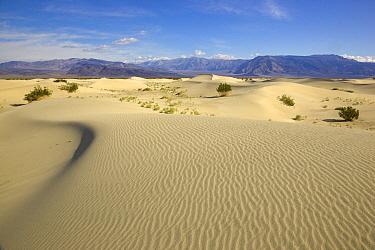 Saline Valley sand dunes, Death Valley National Park, California  -  Yva Momatiuk & John Eastcott