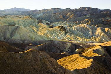 Eroded sandstone ridges and buttes of famous Zabriskie Point, Death Valley National Park, California  -  Yva Momatiuk & John Eastcott