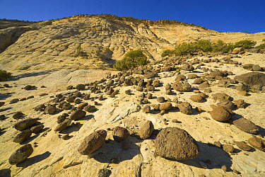 Boulders atop petrified sand dunes created millions of years ago by wind-blown sand, Grand Staircase-Escalante National Monument, Utah  -  Yva Momatiuk & John Eastcott