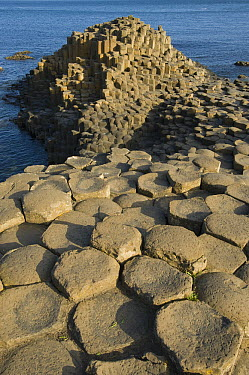 Columnar basalt at sunset, Giant's Causeway, County Antrim, northern Ireland  -  Kevin Schafer