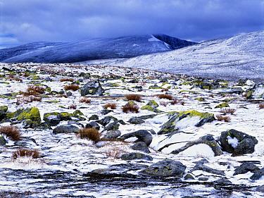 Alpine habitat in snow, Snohetta Mountain, Dovre-Sunndalsfjella National Park, Norway  -  Heike Odermatt