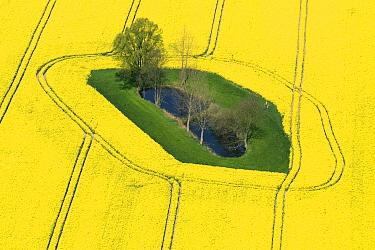 Oil Seed Rape (Brassica napus) fields, Bad Doberan, Germany  -  Willi Rolfes/ NIS