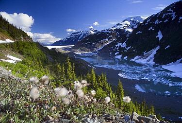 Salmon Glacier spills down from the Coast Range near Hyder, Alaska  -  Matthias Breiter