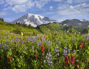 Paradise Meadow and Mount Rainier, Mount Rainier National Park, Washington  -  Tim Fitzharris