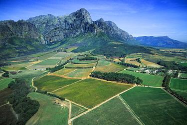 Vineyards, Franshoek Valley, South Africa