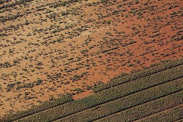Maize (Zea mays) crops, Gauteng, South Africa  -  Richard Du Toit