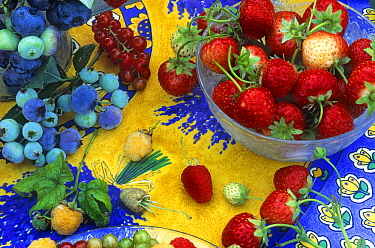 Strawberry (Fragaria sp) and Blueberry (Vaccinium sp) group on colorful tablecloth, Holland  -  Jan Vermeer