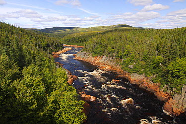 Pinware River with rapids, Labrador, Canada  -  Scott Leslie