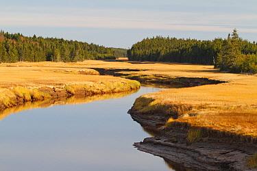 Salt marsh and river, Cape Enrage, Bay of Fundy, New Brunswick, Canada  -  Scott Leslie