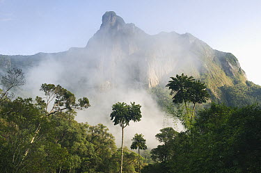 Mist around Leaning Rock mountain in rainforest, Marojejy National Park, Madagascar  -  Kevin Schafer