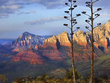 Agave (Agave sp) in Red Rock Country from Schnebly Hill Vista, Arizona  -  Tim Fitzharris