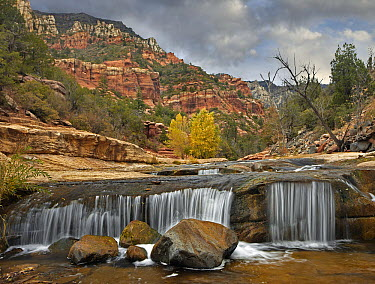 Oak Creek in Slide Rock State Park near Sedona, Arizona  -  Tim Fitzharris