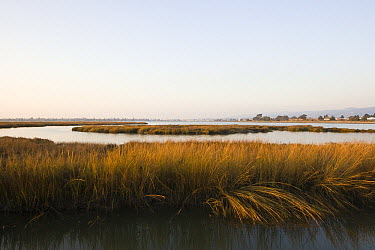 Arrowhead Marsh at high tide with the city of Alameda in the background, Martin Luther King Jr. Regional Shoreline, San Francisco Bay, California  -  Sebastian Kennerknecht