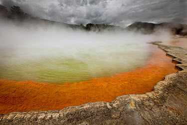 Rain storm approaches Champagne Pool, volcanic lake has constant 74 degree Celsius water including minerals gold, silver mercury, sulphur, and arsenic, Wai-O-Tapu Thermal Wonderland, Rotorua, North Is...  -  Colin Monteath/ Hedgehog House