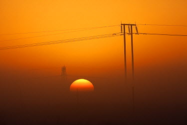 Powerlines at sunrise, Marievale Bird Sanctuary, South Africa  -  Richard Du Toit