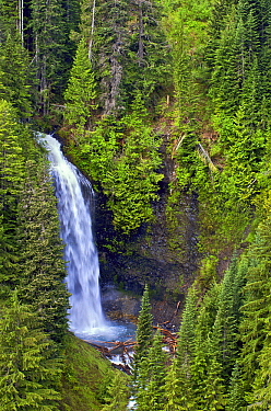 Sylvia Falls cascading in Steven's Woods, Mount Rainier National Park, Washington  -  James Christensen