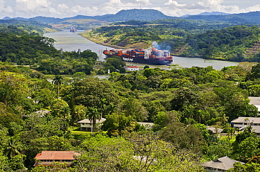 Panama Canal with container ships next to townsite, Gamboa, Panama  -  James Christensen