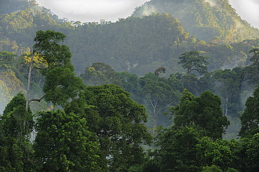 Lowland mixed dipterocarp forest, Lambir Hills National Park, Borneo, Malaysia  -  Ch'ien Lee