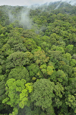 Canopy of lowland mixed dipterocarp forest, Lambir Hills National Park, Borneo, Malaysia  -  Ch'ien Lee
