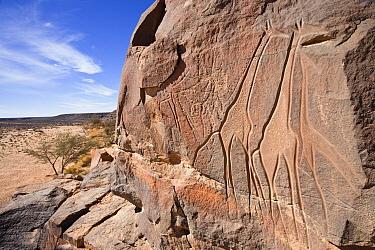 Stone engravings of Wadi Mathendous, Libyan Desert, Libya  -  Konrad Wothe