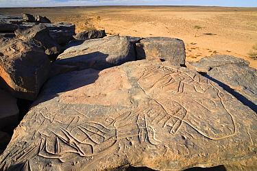 Stone engravings, Libyan Desert, Libya  -  Konrad Wothe