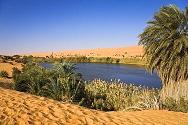 Mandara Lake in the dunes of Ubari, Umm-al-Maa, Libya  -  Konrad Wothe