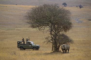 Black Rhinoceros (Diceros bicornis) with anti-poaching patrol, Kenya  -  Ferrero-Labat/ Auscape