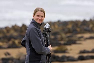 Videographer Silke Arndt with Cape Fur Seal (Arctocephalus pusillus) colony, Cape Cross, Namibia  -  Ingo Arndt