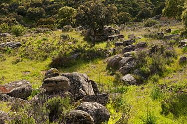 Mediterranean shrubland of Sierra Morena, Sierra de Andujar Natural Park, Andalusia, Spain  -  Pete Oxford