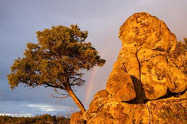 Rainbow behind tree and boulders in the Sierra Morena, Sierra de Andujar Natural Park, Andalusia, Spain  -  Pete Oxford