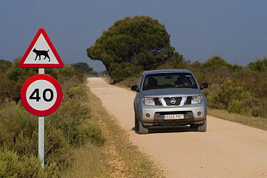 Spanish Lynx (Lynx pardinus) traffic signs, Donana National Park, Huelva, Andalusia, Spain  -  Pete Oxford