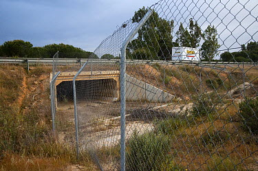 Faunal bi-pass built under the road for animals to connect between various area of the park, Donana National Park, Huelva, Andalusia, Spain  -  Pete Oxford