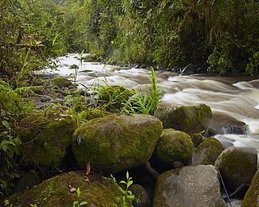 Mindo River flowing through cloud forest, Ecuador  -  Tim Fitzharris