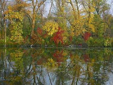 Autumn reflection on Marsh's Lake, Spruce Woods Provincial Park, Canada  -  Tim Fitzharris
