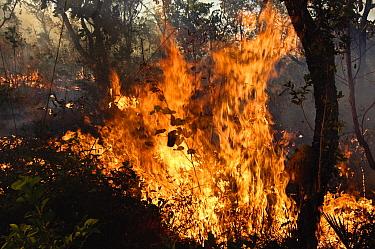 Brush fire in the Cerrado ecosystem, Formosa do Rio Preto, Brazil