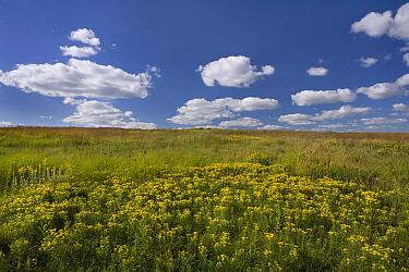 Tallgrass prairie, Touch the Sky Northern Tallgrass Prairie National Wildlife Refuge, Minnesota  -  Jim Brandenburg