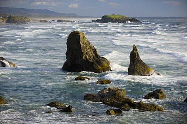 Seastacks and rugged Pacific coastline, Bandon, Oregon  -  Kevin Schafer