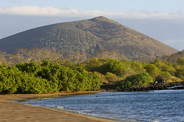 Espumilla Beach, Santiago Island, Galapagos Islands, Ecuador  -  Pete Oxford