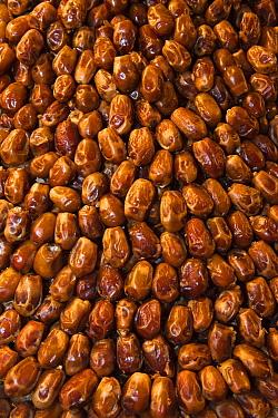 Date Palm (Phoenix dactylifera) fruit for sale in Djemaa el-Fna, Marrakesh, Morocco  -  Pete Oxford