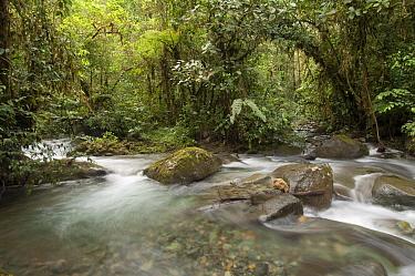 Los Cedros River, Cotacachi-Cayapas Reserve, Ecuador  -  Murray Cooper