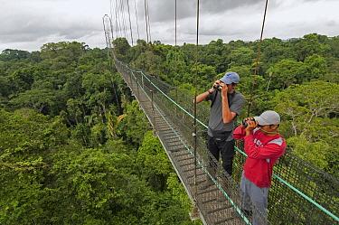 Tourists birdwatching in canopy walkway, Sacha Lodge, Amazon, Ecuador  -  Murray Cooper